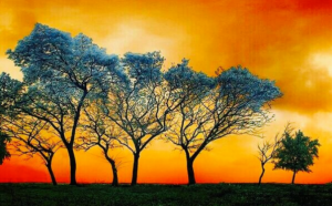 Look to the Heavenly Blue Trees