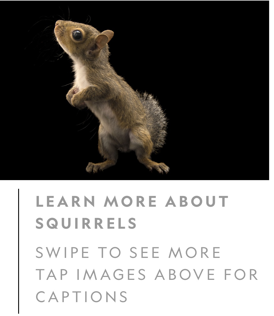 Try Not to Invade Squirrel's Privacy ~ Video Included 267 Views