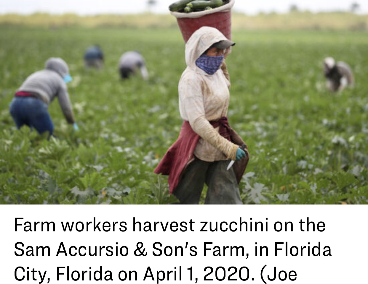 Critically Urgent – Helping Farmers, Farmworkers and Meat Processing Plants Stave Off A Coronavirus Crisis