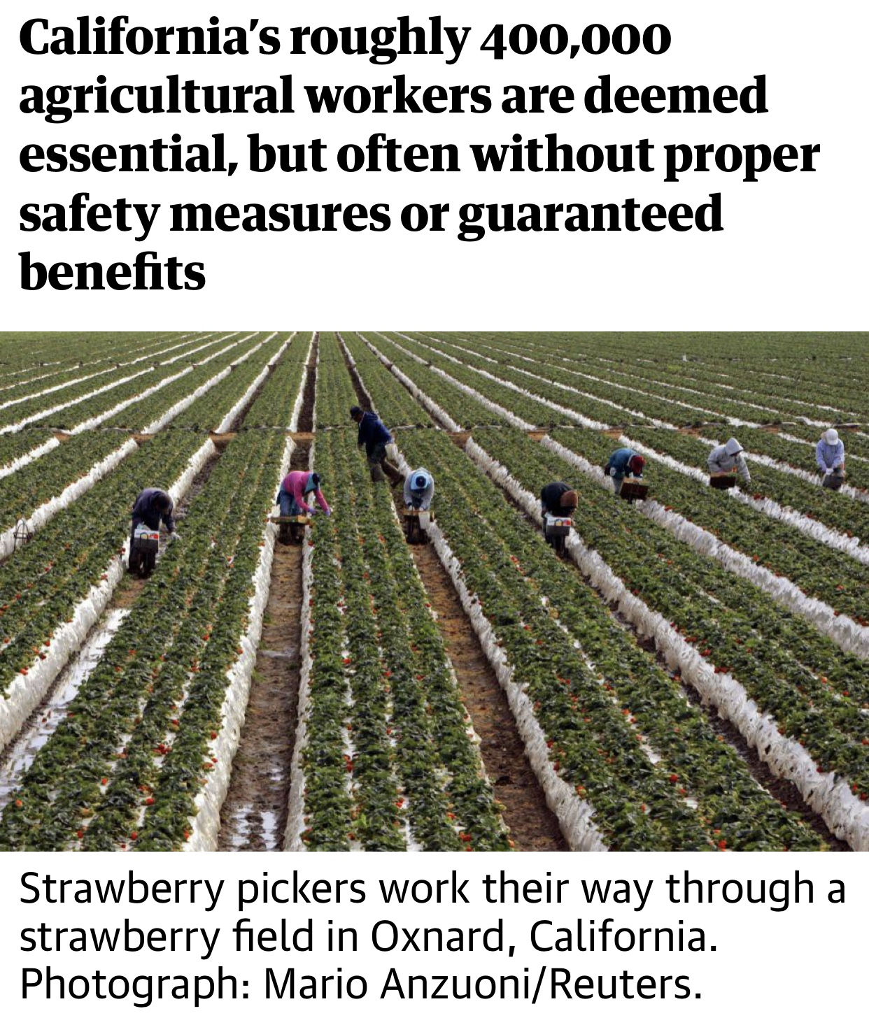 California's Farm Workers Pick America's Essential Produce Unprotected From Coronavirus