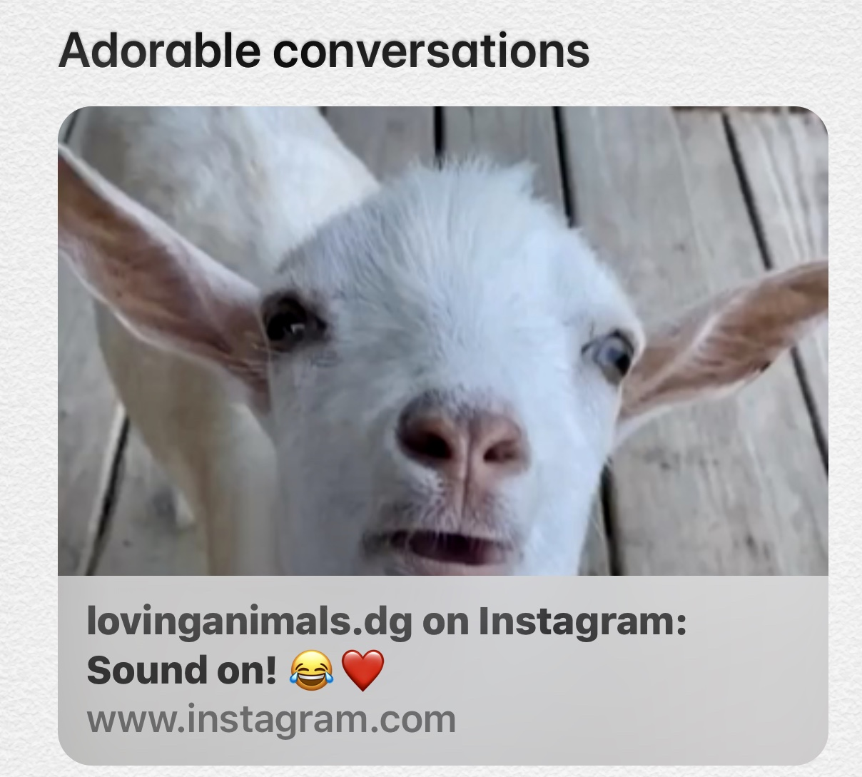 Adorable Pet Conversations